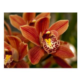 Cartão Postal Flores alaranjadas da orquídea