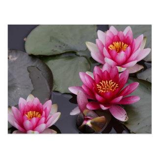 Cartão Postal Flores bonitas do lago