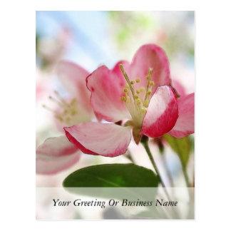 Cartão Postal Flores brilhantes de Apple do primavera