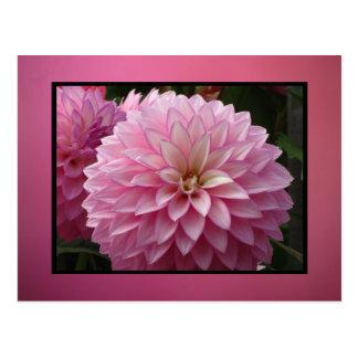 Cartão Postal Flores cor-de-rosa