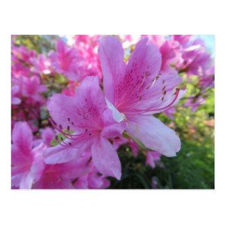 Cartão Postal Flores cor-de-rosa brilhantes