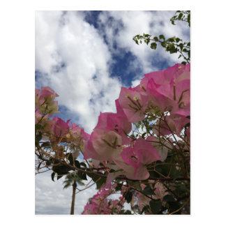Cartão Postal flores cor-de-rosa contra um céu azul