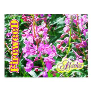 Cartão Postal Flores cor-de-rosa do Fireweed em Alaska
