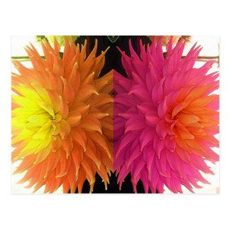 Cartão Postal Flores cravadas alaranjadas & cor-de-rosa