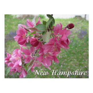 Cartão Postal Flores da árvore de maçã do caranguejo de New