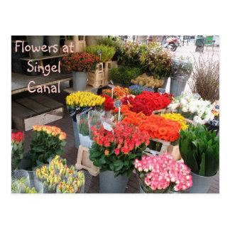 Cartão Postal Flores de Amsterdão