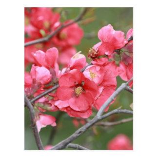 Cartão Postal Flores de Apple de caranguejo