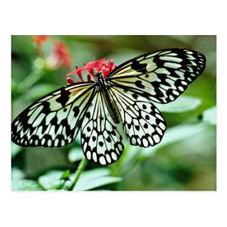 Cartão Postal Flores de borboleta
