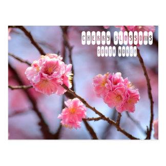 Cartão Postal Flores de cerejeira em Coreia do Sul