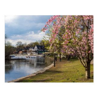Cartão Postal Flores de cerejeira, fileira do Boathouse,