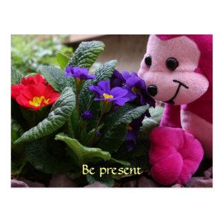 Cartão Postal Flores de cheiro do macaco cor-de-rosa