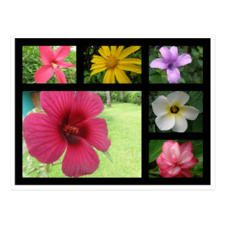 Cartão Postal Flores de Costa Rica