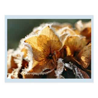 Cartão Postal Flores de hortênsia com aros