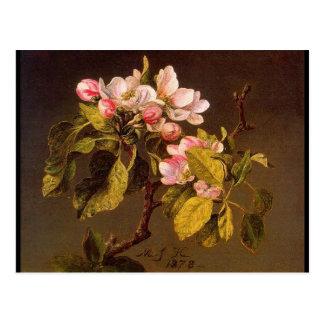 Cartão Postal Flores de Martin Johnson Heade Apple