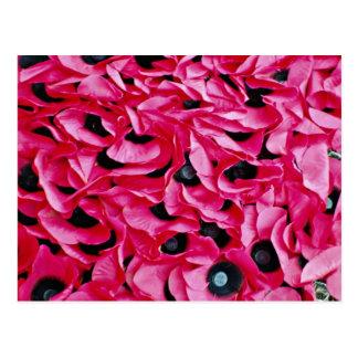 Cartão Postal Flores do dia da papoila