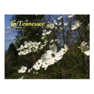 Cartão Postal Flores do Dogwood