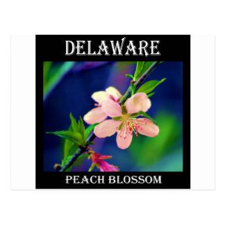 Cartão Postal Flores do pêssego de Delaware