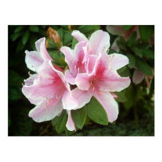 Cartão Postal Flores do rododendro