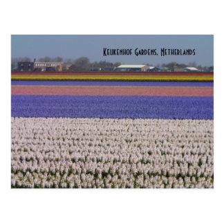 Cartão Postal Flores dos Países Baixos