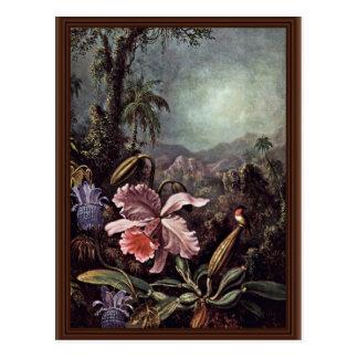 Cartão Postal Flores e colibris da paixão das orquídeas por
