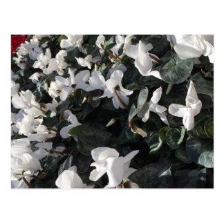 Cartão Postal Flores e unicórnios