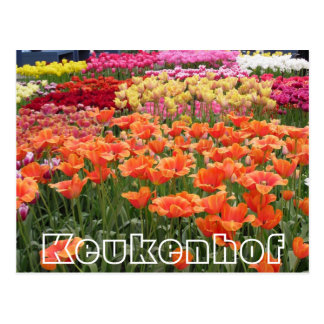 Cartão Postal Flores em Keukenhof, em laranja, em amarelo e em