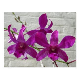 Cartão Postal Flores exóticas violetas da orquídea
