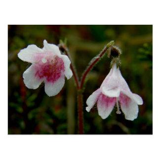 Cartão Postal Flores gêmeas da flor, ilha de Unalaska