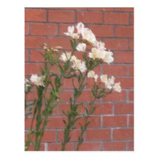 Cartão Postal Flores no tijolo