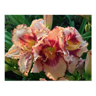 Cartão Postal Flores orientais do lírio do pêssego