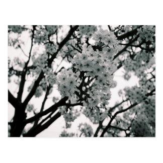 Cartão Postal Flores pretas & brancas