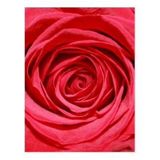 Cartão Postal Flores românticas de seda das pétalas de rosas