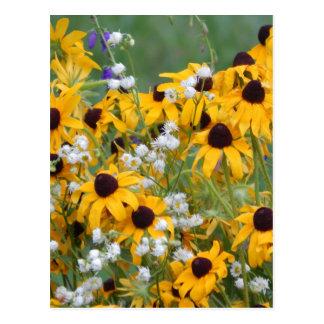 Cartão Postal Flores susan de olhos pretos