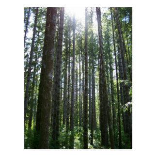 Cartão Postal Floresta da ilha de Vancover
