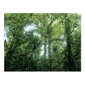 Cartão Postal Floresta da nuvem de Monteverde, Costa Rica.