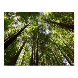 Cartão Postal Floresta da sequóia vermelha, Rotorua, Nova
