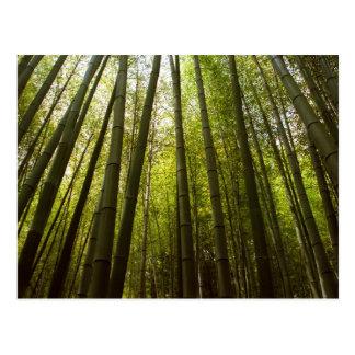 Cartão Postal Floresta de bambu de Sagano