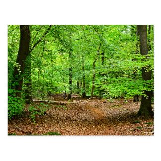 Cartão Postal Floresta de Netherland