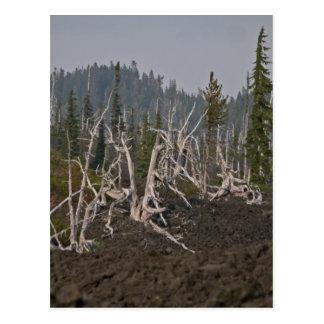 Cartão Postal Floresta do fantasma na lava, McKenzie idoso Hwy