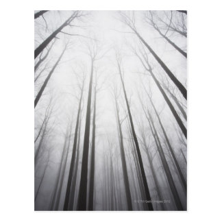 Cartão Postal Floresta do inverno na névoa, New-jersey
