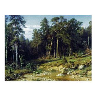 Cartão Postal Floresta do pinho na província de Viatka