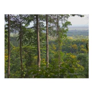 Cartão Postal Floresta húmida 2