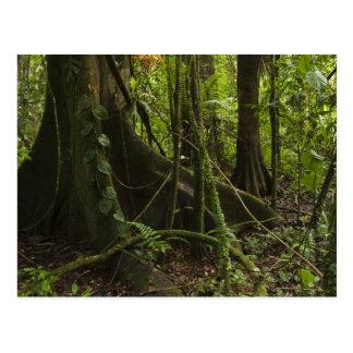 Cartão Postal Floresta húmida, rio Rupununi norte de Mapari,