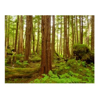 Cartão Postal Floresta húmida temperada do Alasca