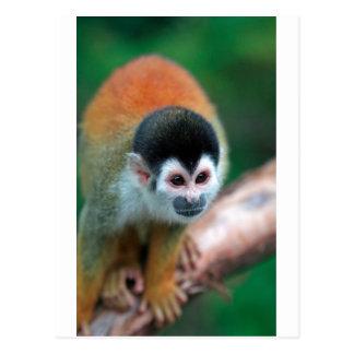 Cartão Postal Floresta húmida tropical bonito de Panamá do