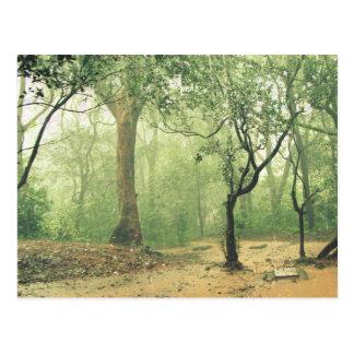Cartão Postal Floresta húmida tropical Ghats ocidental India