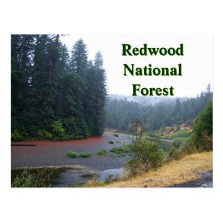 Cartão Postal Floresta nacional da sequóia vermelha