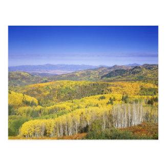 Cartão Postal Floresta nacional de Routt na cor do outono, perto