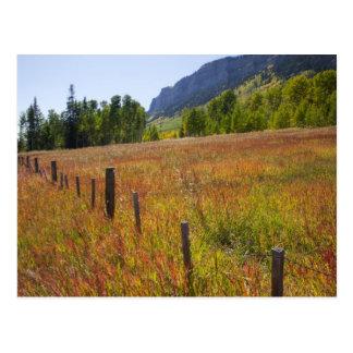 Cartão Postal Floresta nacional dos EUA, Colorado, San Juan,