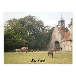 Cartão Postal Floresta nova Hampshire